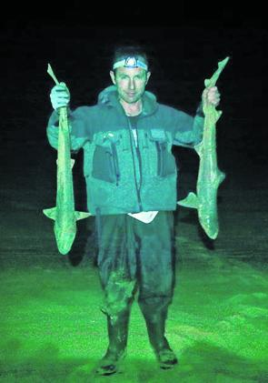 Clint Jones managed to pick the one in a million night where there was no weed on the beach. He managed to land these 2 nice gummy sharks in perfect conditions.